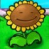 小小Sun花