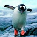 轉圈的企鵝